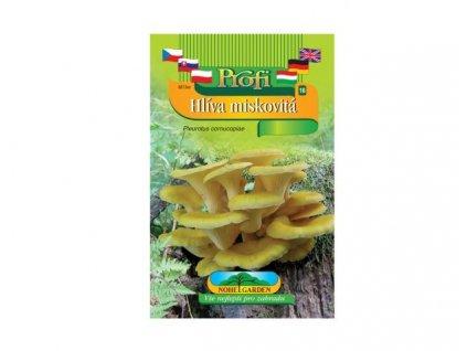 Pleurotus cor/hlíva misk/žl