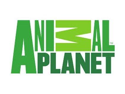 Mojo Animal Planet Brožura 2019