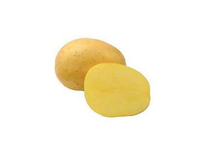 Sadba brambor Belana 5 kg, PR