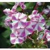 PHL AdessaSpecial LilacTwist 467350