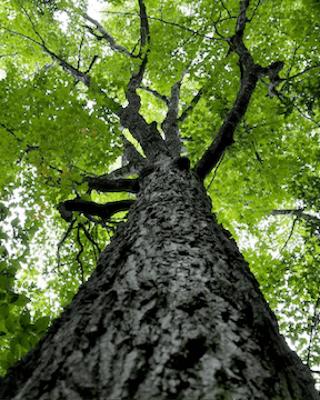 Vzrostlé stromy a keře