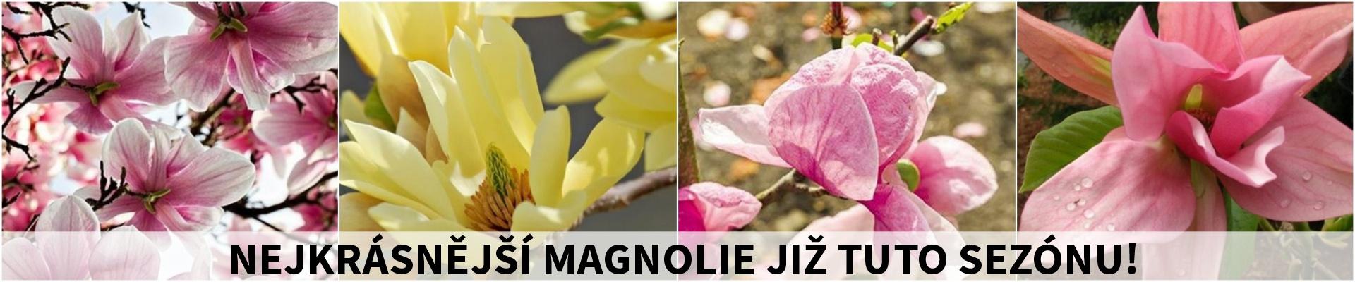 Magnolie jaro 2019