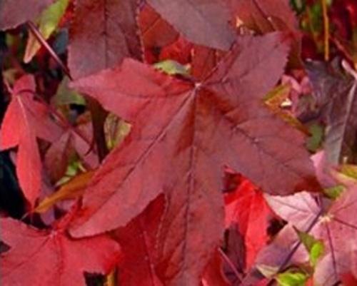 Ambroně - speciální podzimní nabídka