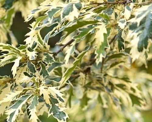 Duby - speciální podzimní nabídka