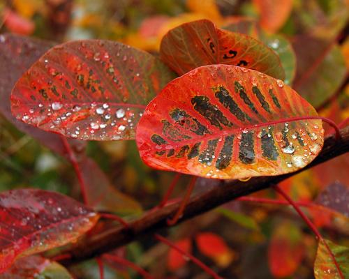 Ruje vlasaté - speciální podzimní nabídka