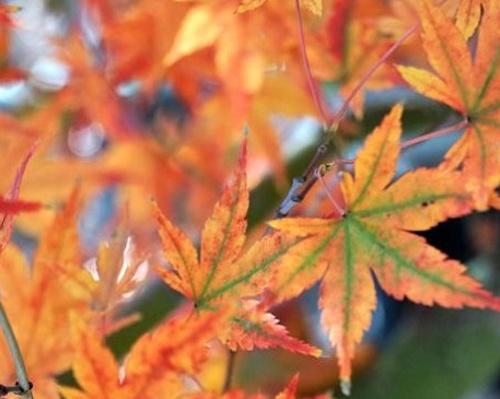 Javory - speciální podzimní nabídka