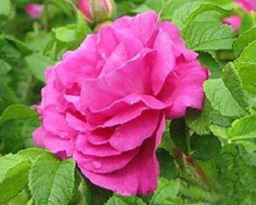 Růže - speciální podzimní nabídka
