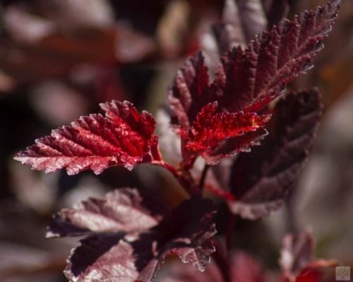 Tavoly - speciální podzimní nabídka