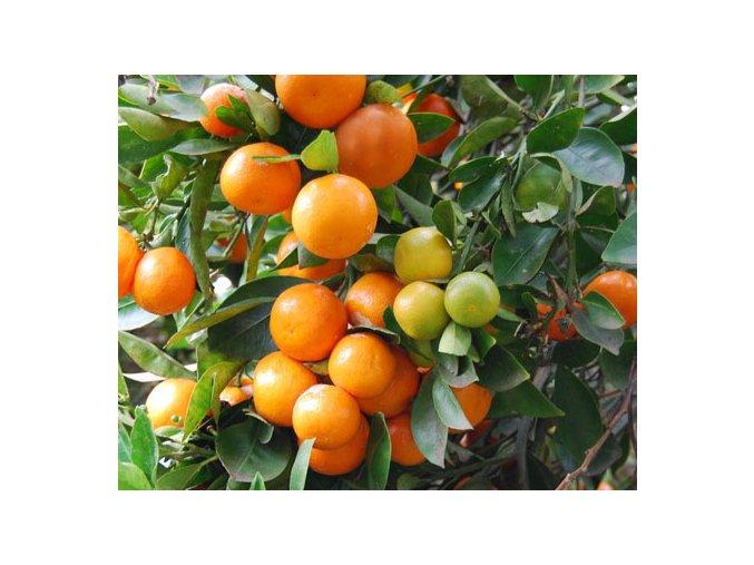 Citrusy - různé druhy