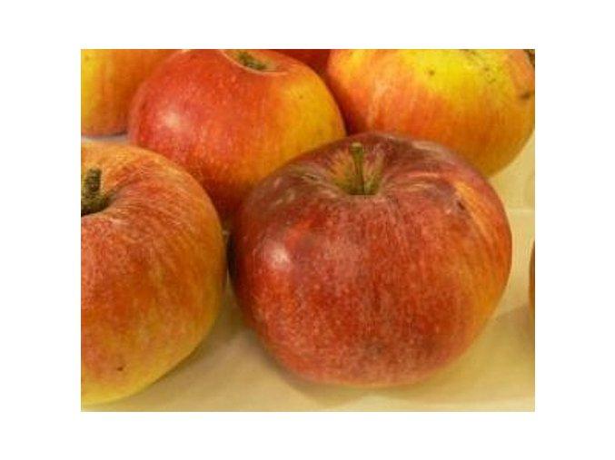 Jabloň ´Baumanova Reneta´