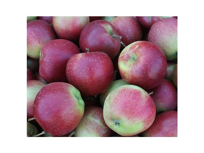 Jabloň ´Elise´