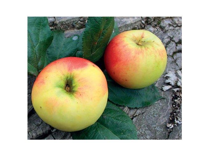 Jabloň ´Schmidtbergerovo´