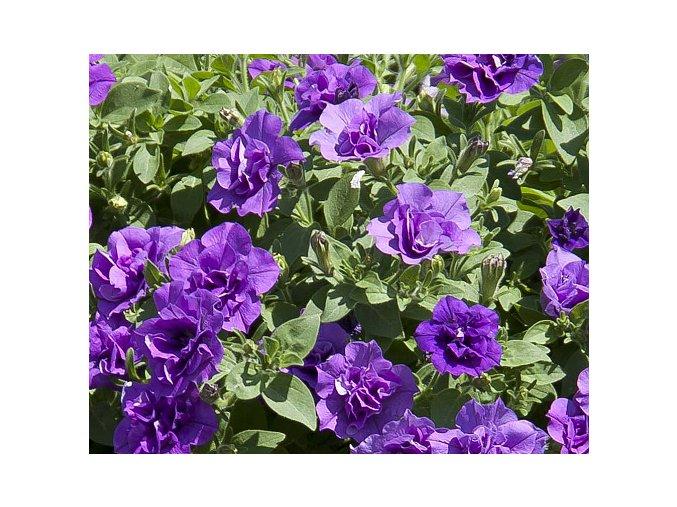 SweetSunshine® Provence