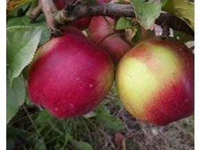 Jabloň ´James Grieve Red´