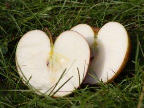 Jabloň ´James Grieve´