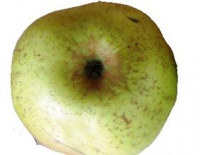 Jabloň ´Kmínová Reneta´