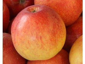 Jabloň ´Nabella´