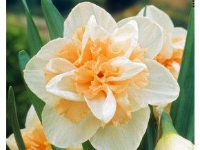 Narcis ´Delnashaugh´