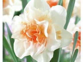 Narcis ´Replete´ 3 ks