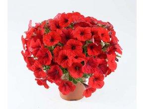 alpetunia red