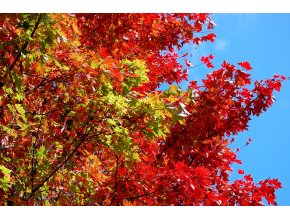 fall color leaves change red blue sky 1570333 pxhere.com