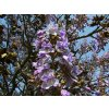 tree branch blossom plant flower spring 877483 pxhere.com