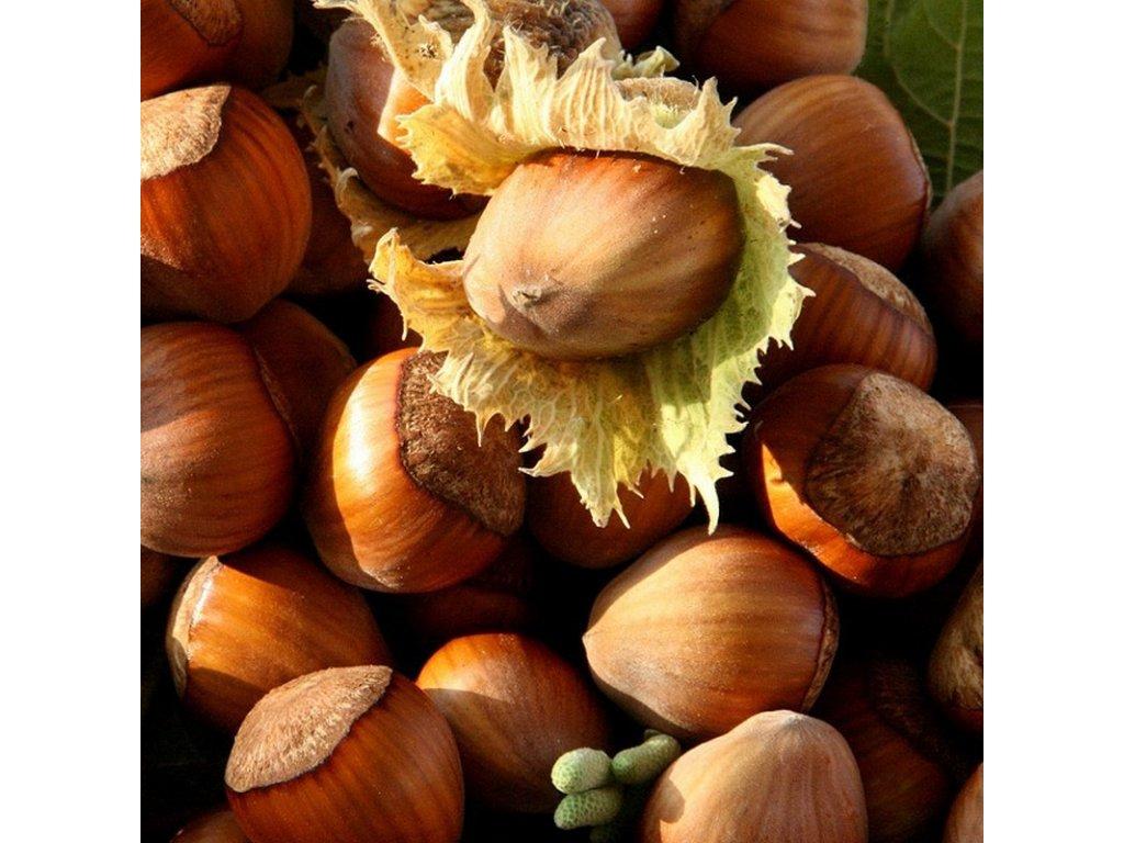 Corylus avellana Segorbe - Lískové oříšky