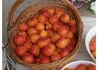 Meruňky, broskvoně a nektarinky