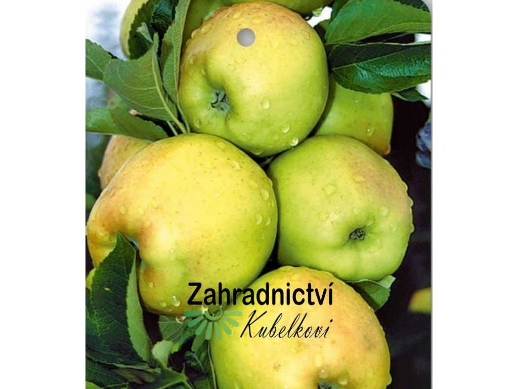 BOLERO jabloň2
