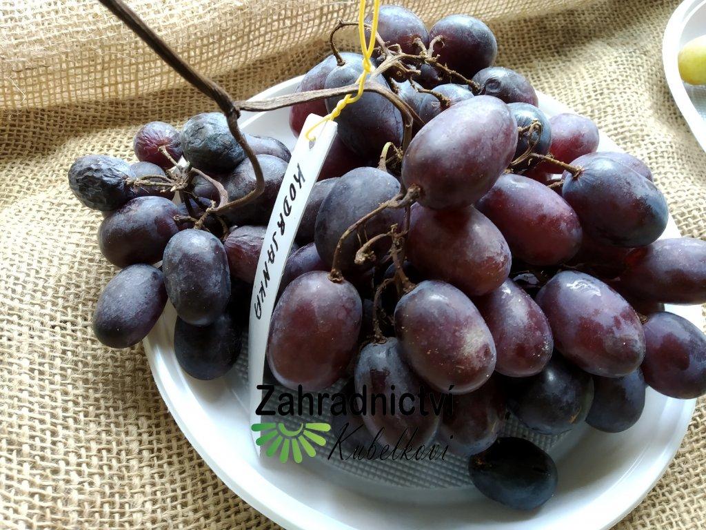 Vinná réva stolní - 'Kodrjanka' - PROSTOKOŘENÁ