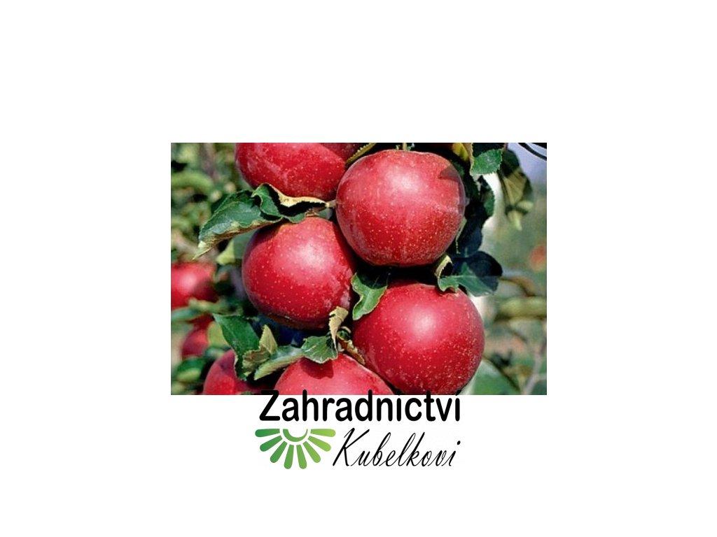 Jabloň Walz 2
