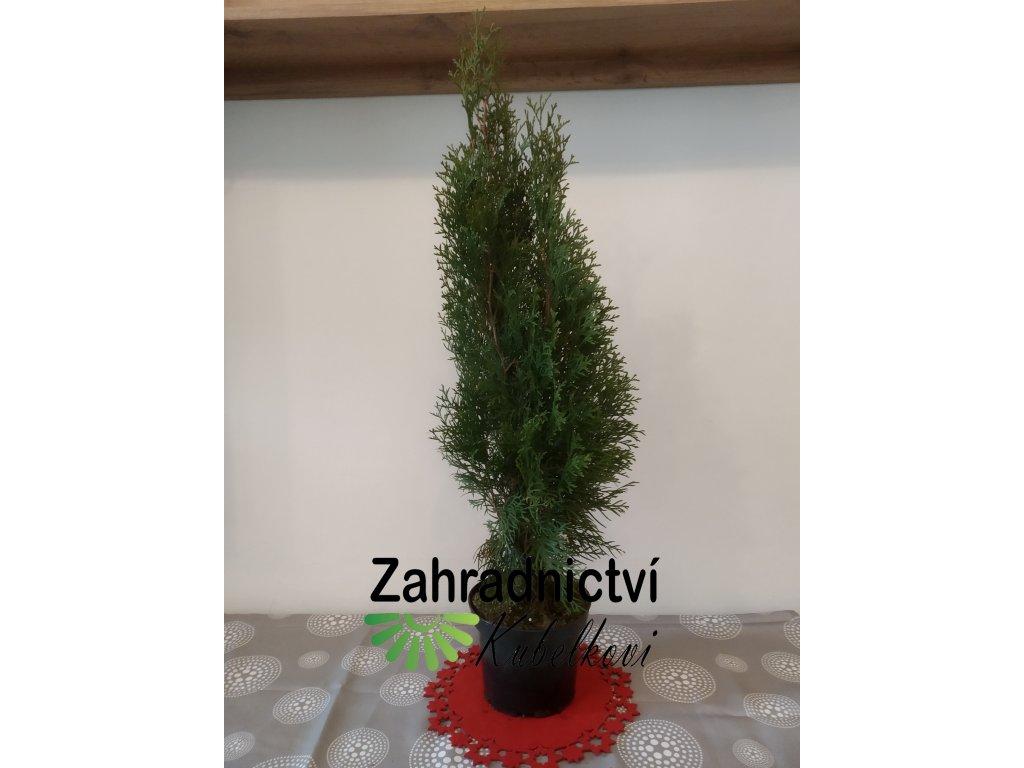 Vánoční dekorace - Zerav - Thuja