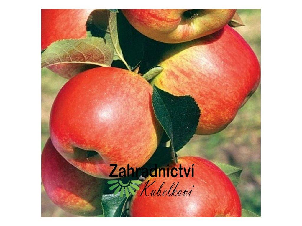 POLKA jabloň2
