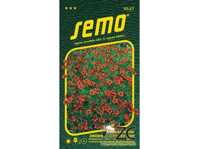 40409 1 aksamitnik drobnokvety cerveny 0 2g