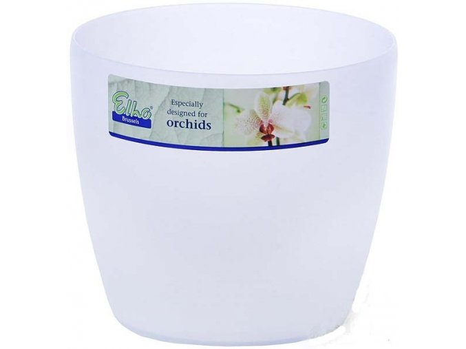 Obal Brussels Orchid - 12,5cm