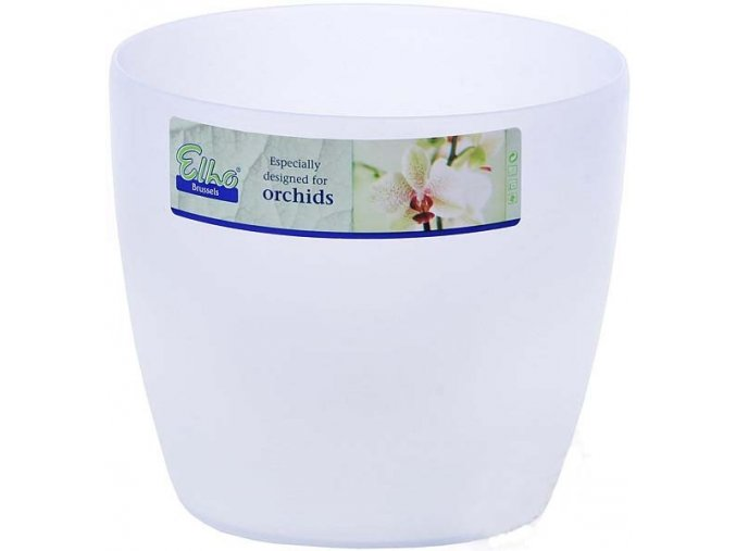Obal Brussels Orchid - 16cm