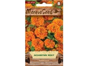 40439 aksamitnik nizky plnokvety oranzovy moravoseed