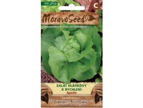 54407 salat hlavkovy apollo moravoseed