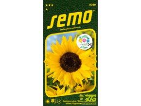 62303 1 slunecnice rocni sun 2g serie kolekce kvetiny k rezu