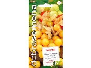 Mochyně ojíněná - Jantar ananasová 0,2g-DOBRÁ SEMENA