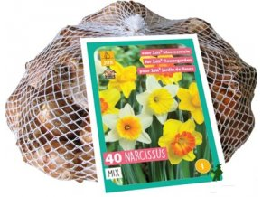Narcis Large Cupped Mix XXL (40cibulí)
