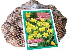 Narcis Téte-Téte XXL (60cibulí)