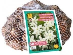 Narcis Triandrus Thalia XXL (40cibulí)