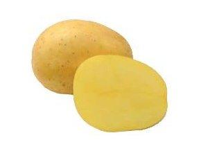 64973 1 sadba brambor belana 5 kg r