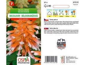 Šalvěj zářivá  bílooranžová - SEVA MORAVIA