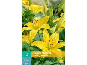 Lilie - Asiatic Yellow (2 cibule)