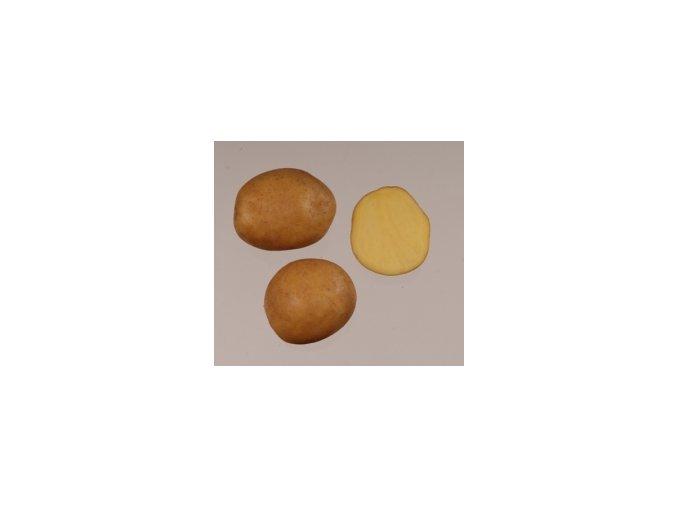 Sadbové brambory - Magda