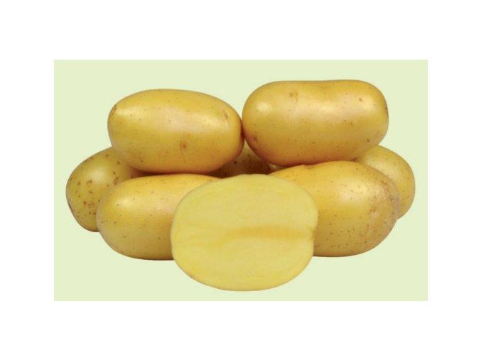 Sadbové brambory - Anuschka