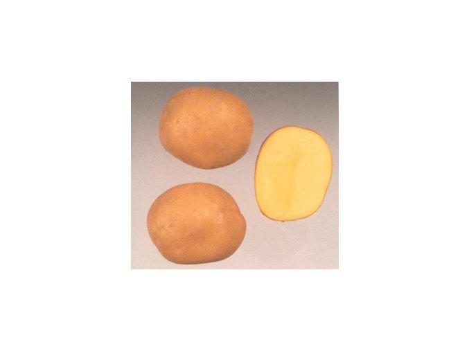 Sadbové brambory - Belana