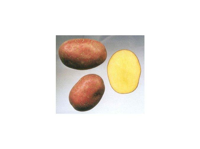 Sadbové brambory - Laura